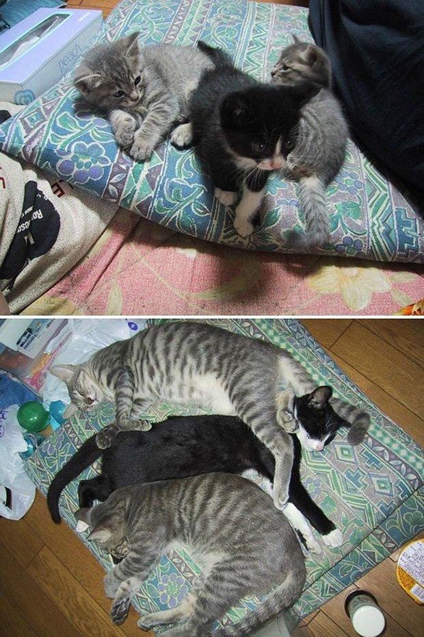 Gatos antes e depois (20)