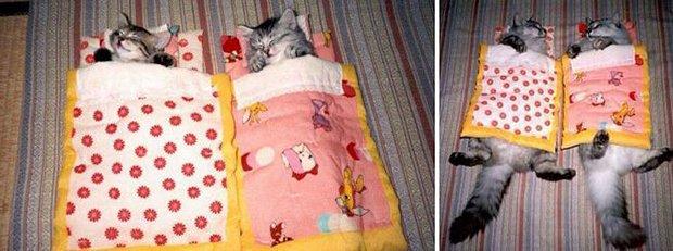 Gatos antes e depois (3)