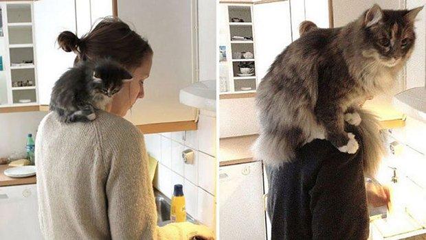 Gatos antes e depois (6)