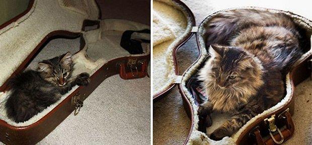 Gatos antes e depois (7)
