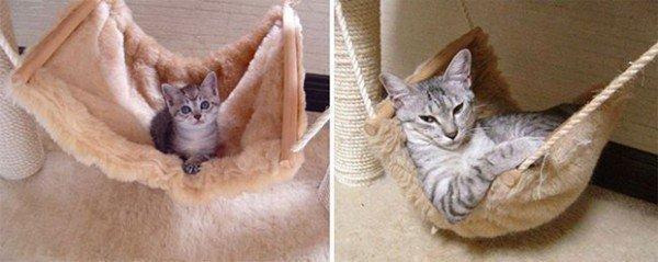 Gatos antes e depois 8