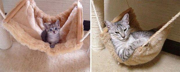 Gatinhos: antes e depois