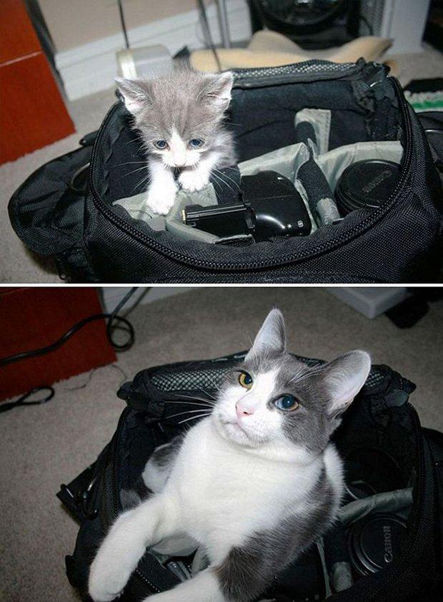 Gatos antes e depois (9)