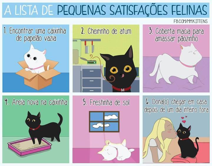 Pequenas satisfacoes felinas 1