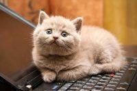 Pequenas satisfações felinas