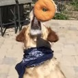 Fritz, o cachorro que não sabe pegar comida no ar