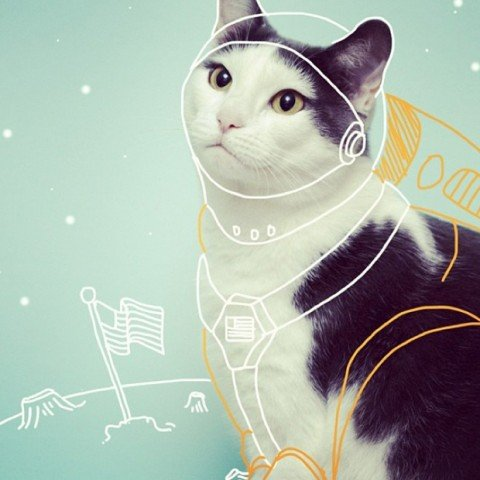 Instagram da Semana: I draw on cats