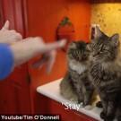 Ensinando linguagem de sinais para gatos 4