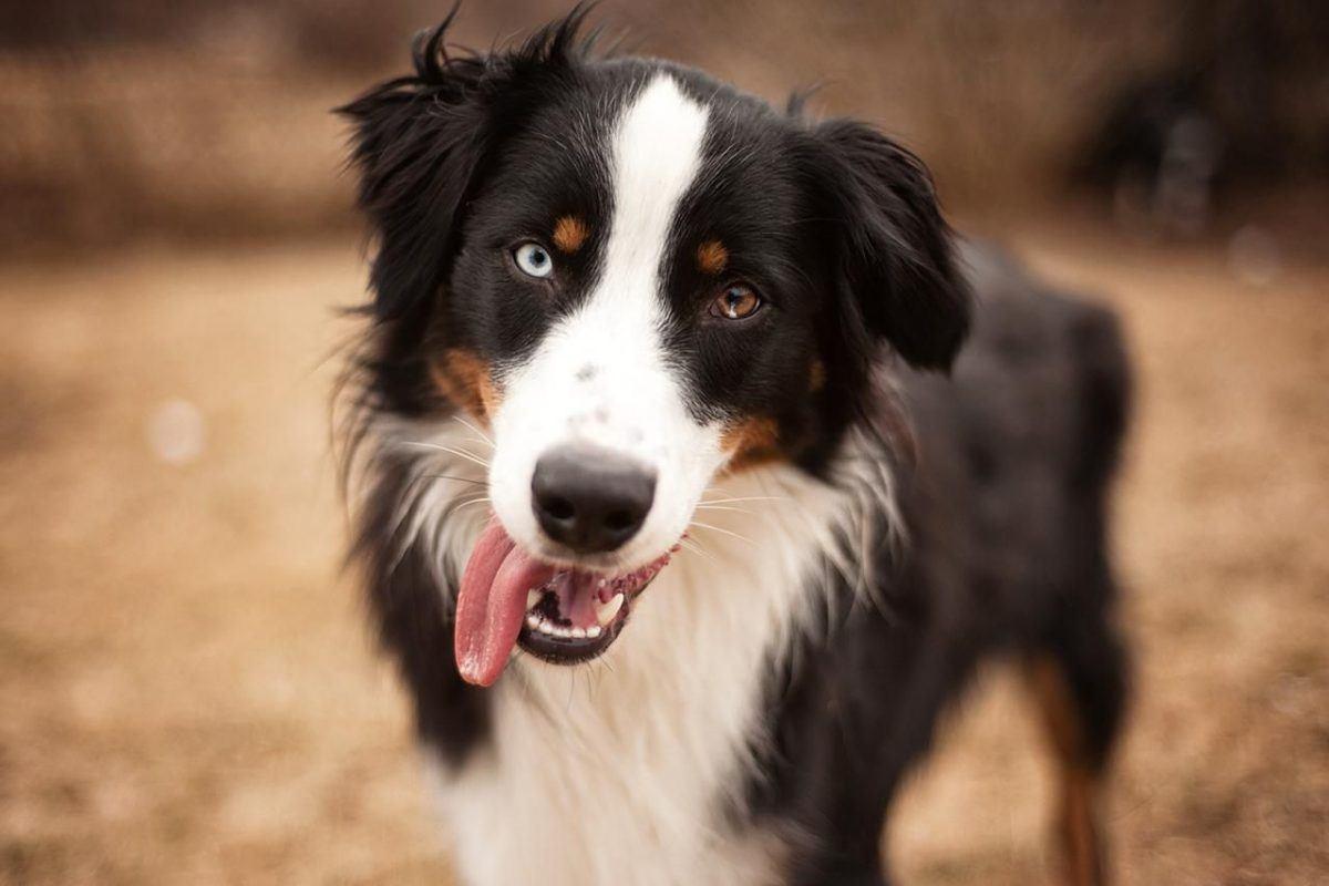 Um cachorro chamado Shep