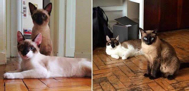 Gatos antes e depois (22)