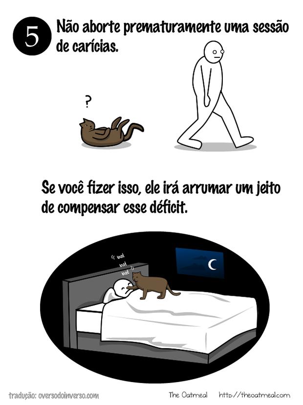 Como brincar com um gato (4)