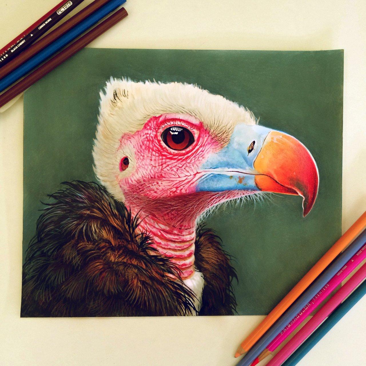Ilustracoes realistas feitas apenas com lapis de cor (10)