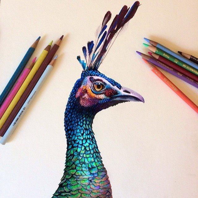 Ilustracoes realistas feitas apenas com lapis de cor (9)