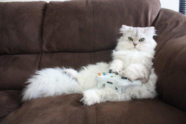 Ser um gato e viver dentro de um jogo de video game