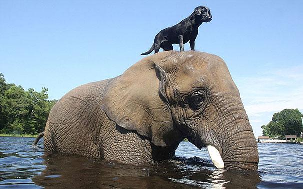 Amizades improvaveis (1)