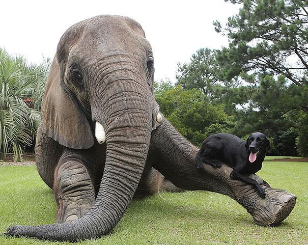 Amizades improvaveis (2)