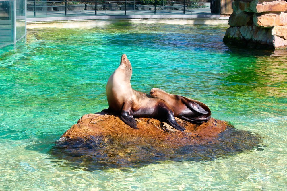 O-maior-zoologico-do-mundo-(1)