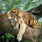 O-maior-zoologico-do-mundo-(13)