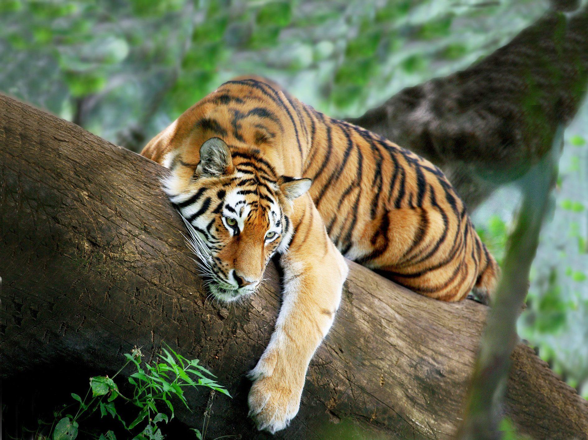 O maior zoologico do mundo