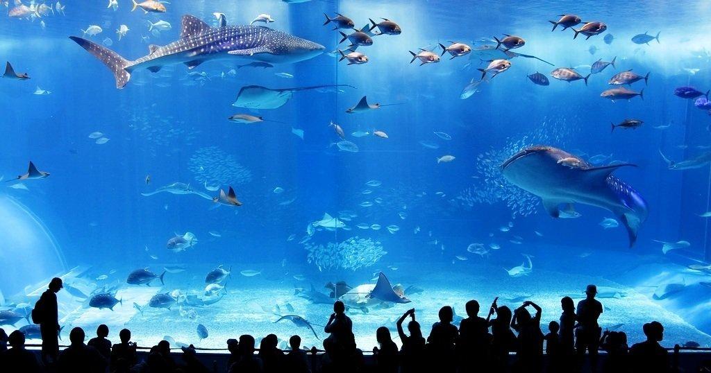 O maior zoologico do mundo (4)