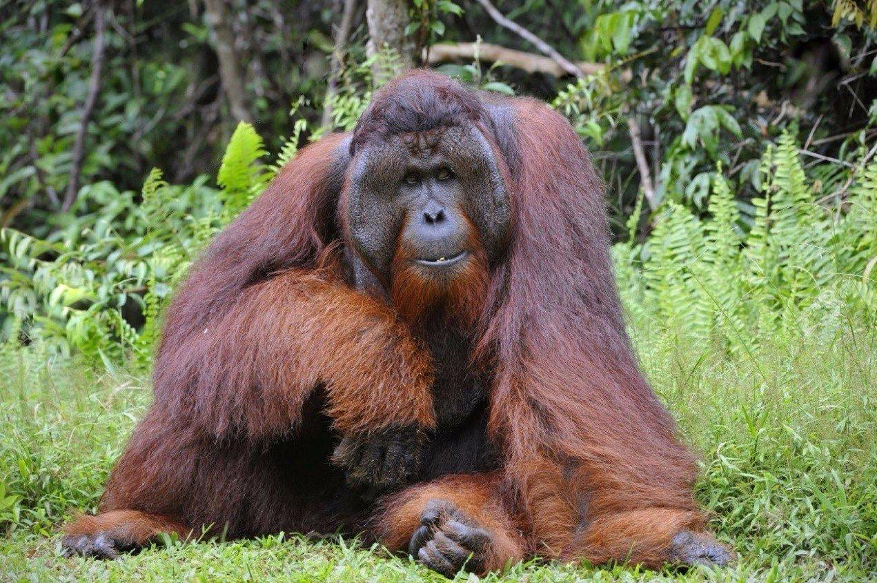 O maior zoologico do mundo (5)