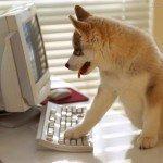 Se alguns sites fossem animais de estimacao 8
