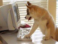 Se alguns sites fossem animais de estimação