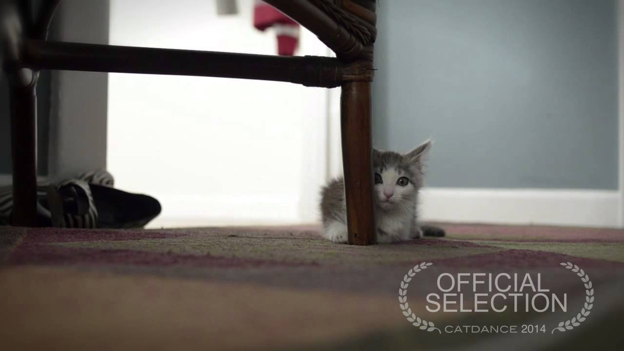 O primeiro dia de um gato adotado