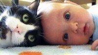 Ter um bebê VS ter um gato