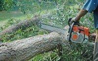 Nunca corte uma árvore