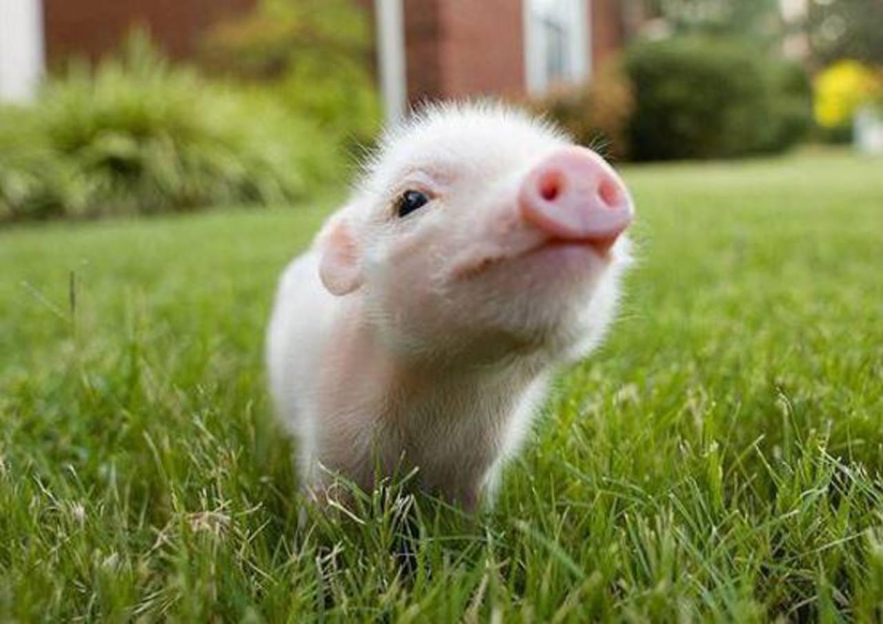 Por que bebês humanos se parecem com um joelho enquanto bebês animais são tão fofinhos?