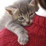 Os beneficios de ter um gato thumb