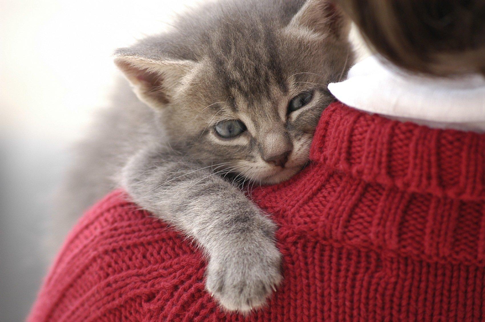 Os benefícios de ter um gato