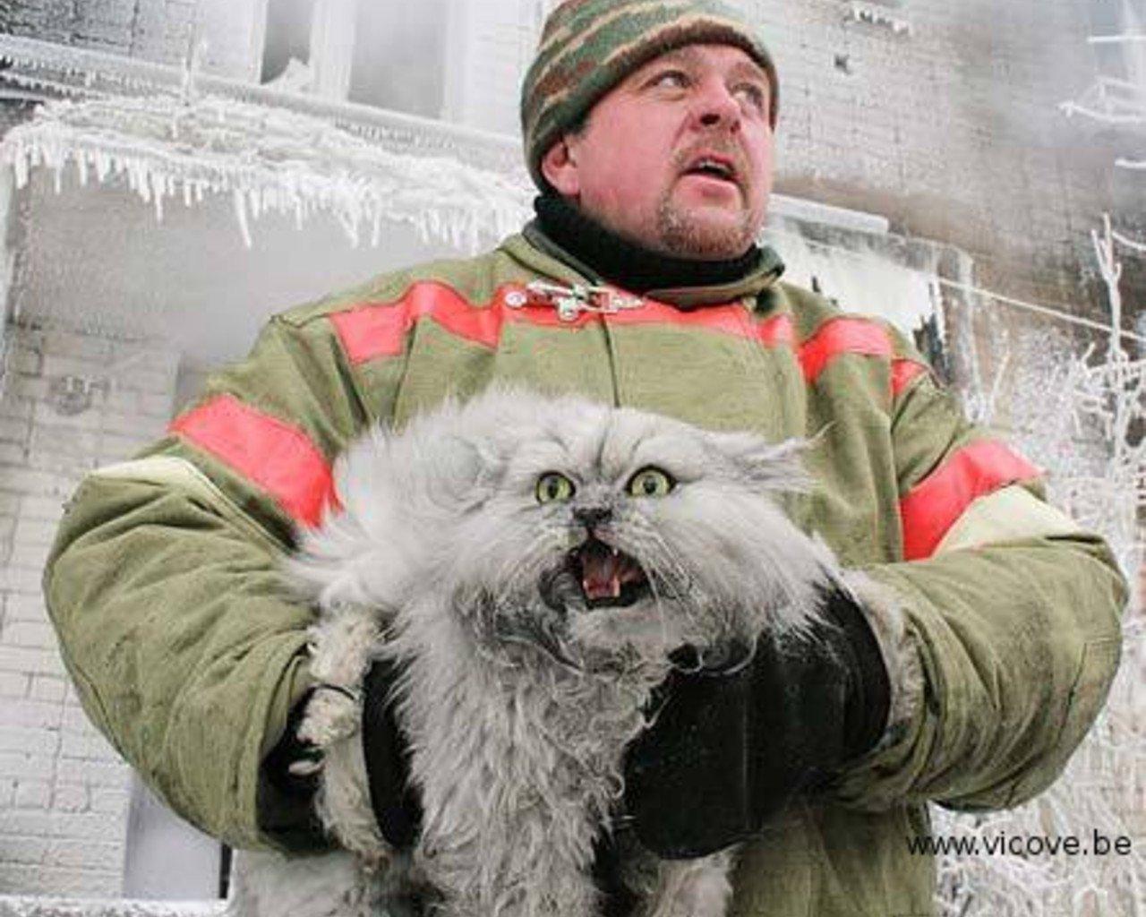 Como os russos resgatam um gato preso em uma árvore