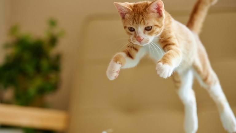 Movimentos felinos e suas traducoes na linguagem humana thumb