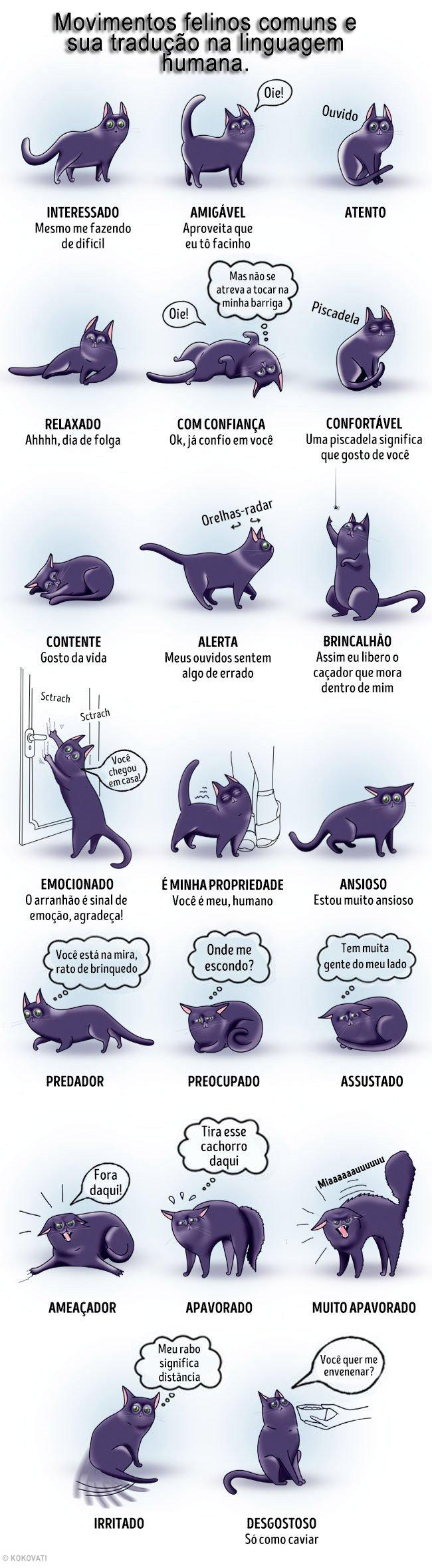 Movimentos felinos e suas traducoes na linguagem humana