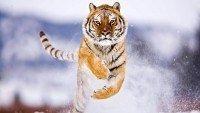 Os medos são tigres de papel