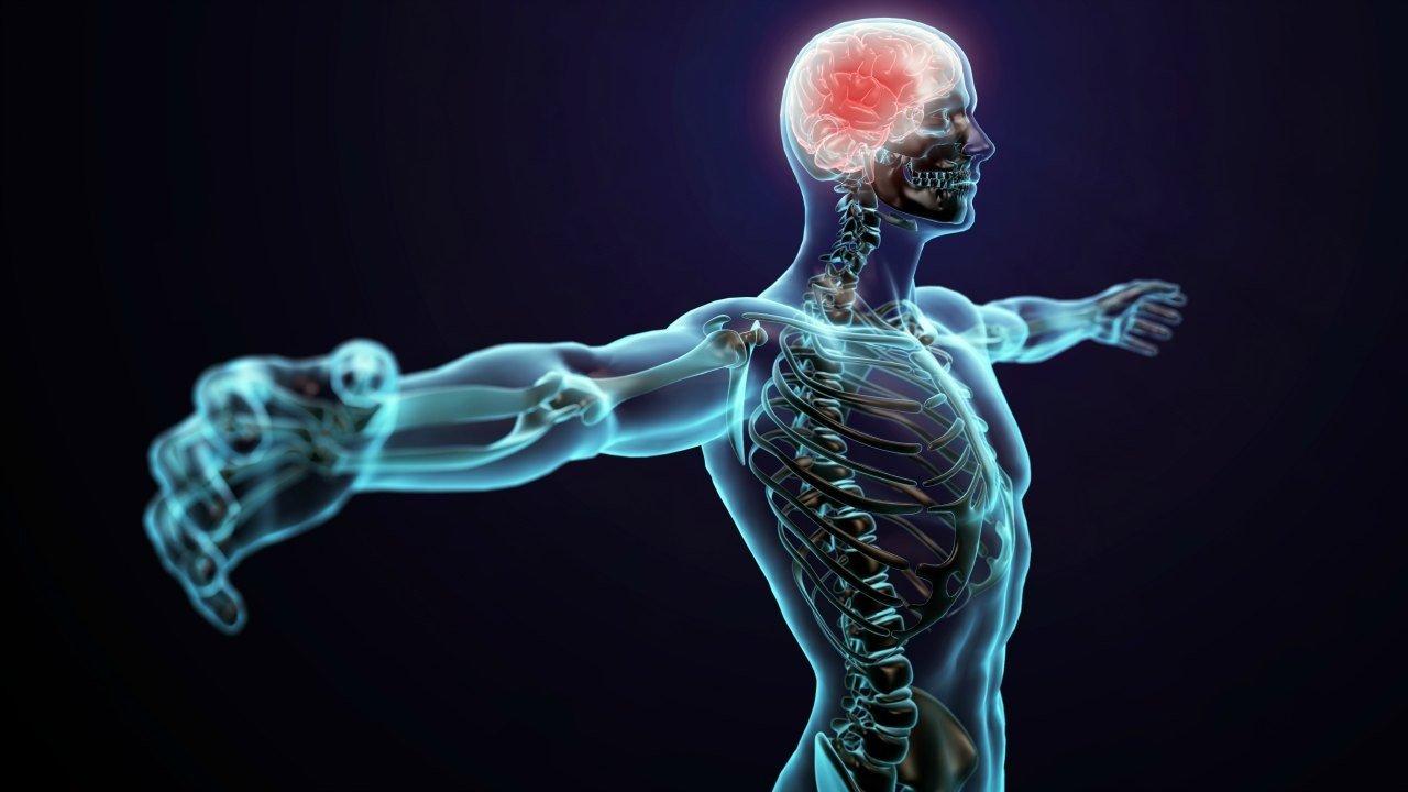 12 mitos sobre o corpo humano