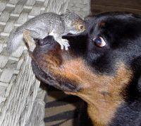 Cachorro e Esquilo brincando de pega-pega ao redor da árvore