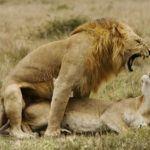 Como seriam os relacionamentos humanos se usassemos rituais de acasalamento dos animais thumb
