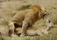 Como seriam os relacionamentos humanos se usássemos rituais de acasalamento dos animais?