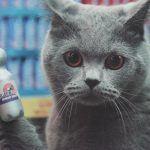 Gatos fazendo compras em um supermercado 2
