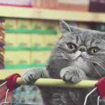 Gatos fazendo compras em um supermercado 3