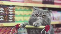 Gatos fazendo compras em um supermercado