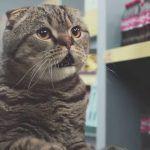 Gatos fazendo compras em um supermercado 4