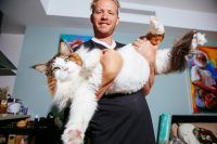 Conheça Samson: o maior gato de Nova York (e talvez do mundo)