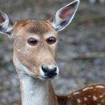 como-os-animais-seriam-se-tivessem-olhos-na-frente-8