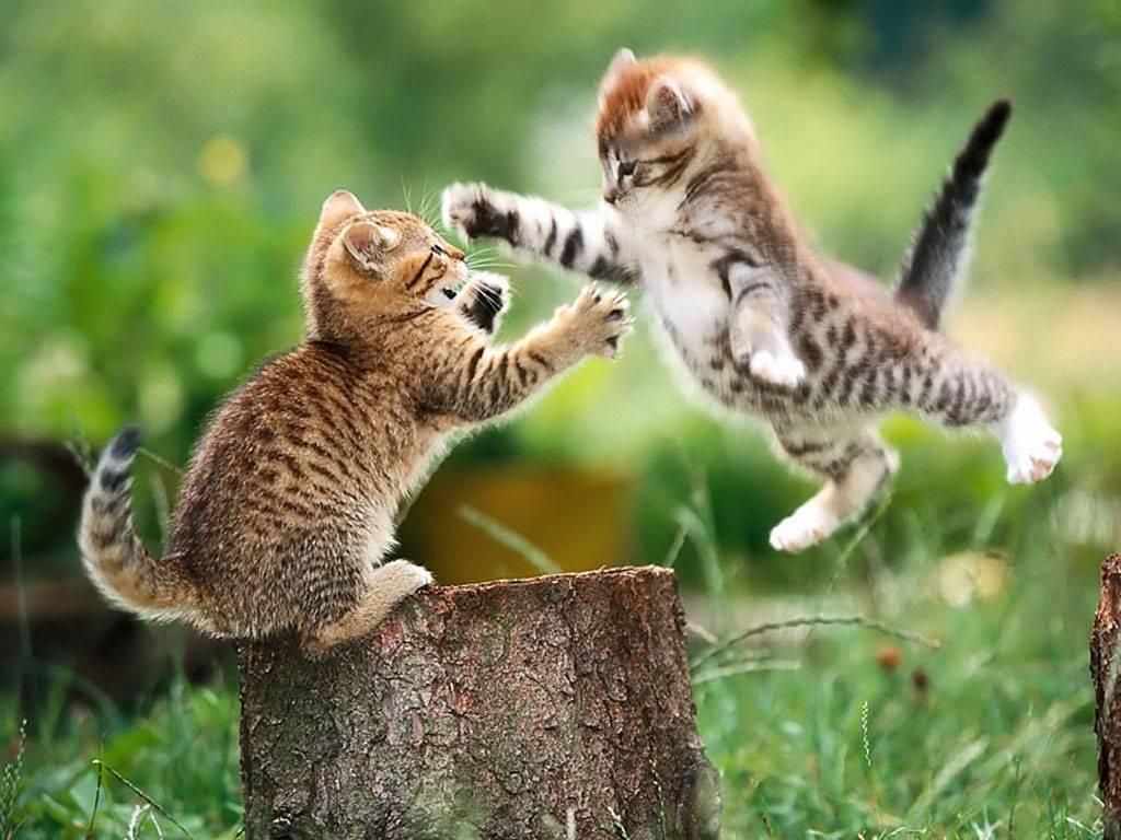 animais brigando
