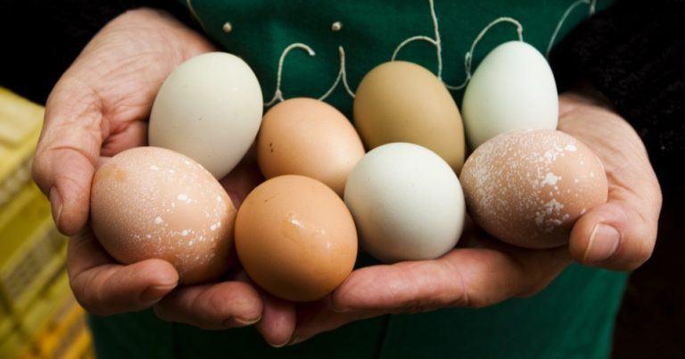 ovo de galinha