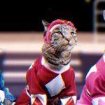 Power Rangers estrelado por gatinhos